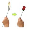 Факел в розу (улучшенная версия)